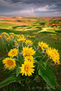 gyclli:   Palouse Sunset / By LongHN Photo