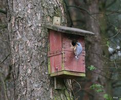 Boomklever werkt aan ingang vogelhuisje