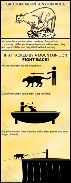 "sweethoney3: "" mybonemalone: "" how to defend yourself against a mountain lion attack "" Hahahahahahahahaha. Nice. """