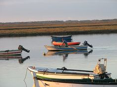 Ria Formosa also has other of areas economic importance due to the variety of fish, shellfish and molluscs. Clams are widely cultivated in this area where production makes up about 80% of total exports of the country. Cockles and Mussels can be seen being harvested by local fishermen daily at low tide in the towns and villages along this part of the Algarve coastline.
