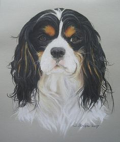 Ziggy - Cavalier King Charles Spaniel by jopetportraits on Flickr.