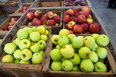 Cold Springs Orchard a fully stocked farm market with products such as apple cider, home baked pies, fruit baskets, and 21 varieties of apples. Open August through March. 10am-6pm.   878 Mechanicsville Rd., Rock Creek, Ohio 44084 (440) 466-0474