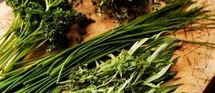 443698-1-eng-GB_herbs