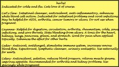 Alphabetical Listing of Herbs and their Uses  . Catnip - Celery
