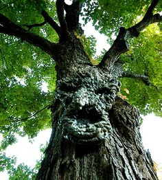 "Crafted from expanding foam and spray paint, this creepily-realistic face was attached to the tree with fishing line. (this would be great for a ""Lord of the Rings"" themed birthday party...Katrina would love Treebeard, and the other Ents!)"