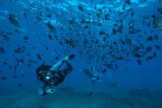 Conheça os melhores pontos para mergulho básico em Noronha