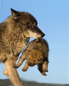 """Hey, mama put me down, I don't wanna bath!"""
