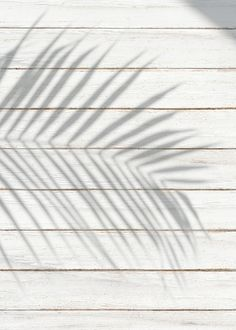 White wooden plank with a leaf shadow background Stock Photo , Beige Aesthetic, Summer Aesthetic, Minimal Photography, Shadow Photography, Aesthetic Backgrounds, Aesthetic Wallpapers, Background Vintage, Textured Background, Pinterest Color