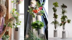 Hydroponic decoration..... Beautiful and relaxing.... At any where in your place!!!