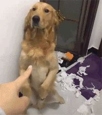 This is Hella cute! Funny Animal Memes, Cute Funny Animals, Funny Dogs, Cute Gif, Funny Cute, Animals And Pets, Baby Animals, Pet Dogs, Dog Cat