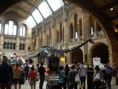 Diplodocus Natural History Museum London