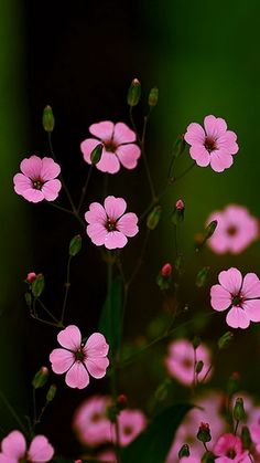 Download 360x640 «Flowers» Cell Phone Wallpaper. Category: Flowers