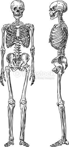 뼈 드로잉 - Google 검색