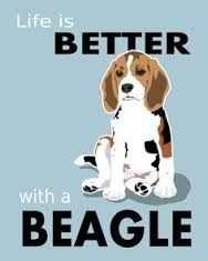 images for beagles.