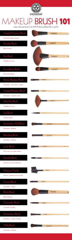 Makeup Brush 101 Infographic