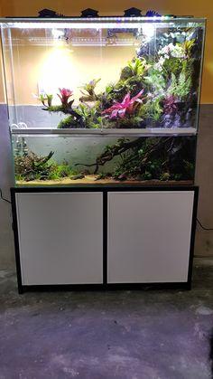 Nano Aquarium, Planted Aquarium, Reptile Terrarium, Terrariums, Amphibians, Reptiles, Aqua Decor, Reptile Room, Crested Gecko