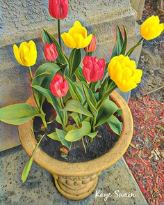 Lovely spring flowers abounding in Roseville CA - sweet joys! #rosevillecalifornia #RosevilleCA #Roseville #rosevillejoys #rosevillecaliforniajoys #RosevilleRealestate #RosevilleRealtor #RosevilleRealEstateAgent #RosevilleCAREALTOR #WestRoseville #RosevilleBlogger #RosevilleCABlogger   via Instagram http://ift.tt/2lcw4iG  IFTTT Instagram