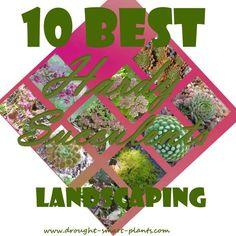 10 Best Hardy Succulents for Landscaping; my recommended xeriscaping plants