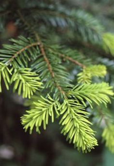 The smell of a freshly cut tree~ Christmas Tree Farm, Christmas Love, Country Christmas, Christmas Colors, Beautiful Christmas, Celebrating Christmas, Woodland Christmas, Merry Christmas, Xmas