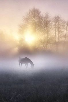Misty morning in the horse's pasture at sunrise All The Pretty Horses, Beautiful Horses, Animals Beautiful, Simply Beautiful, Photo Animaliere, Horse Pictures, Horse Photography, Dream Photography, Travel Photography