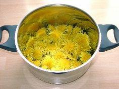 Kräuterküche: Löwenzahn-Honig