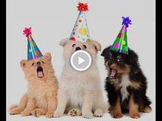 64 Beste Afbeeldingen Van Filmpjes Verjaardag Birthday Wishes