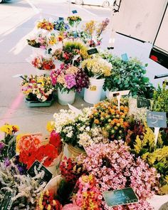 Pretty colorful flowers at the flower market. My Flower, Wild Flowers, Beautiful Flowers, Purple Flowers, Cactus Flower, Exotic Flowers, Yellow Roses, Pink Roses, Pink Peonies