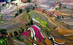 Campos de arroz, Yunnan, China