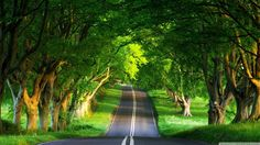 Widescreen Green Nature Hd Pictures One With Beautiful Wallpaper High Resolution Of Mobile Way ~ Full HD Wallpaper Green Nature Wallpaper, Nature Desktop Wallpaper, Beautiful Nature Wallpaper, Images Wallpaper, Tree Wallpaper, Landscape Wallpaper, Scenery Wallpaper, Hd Desktop, Desktop Backgrounds