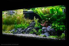 Nature Aquarium, Planted Aquarium, Aquarium Design, Aquarium Ideas, Fish Tank Design, Fish Gallery, Fish Care, Vivarium, Aquatic Plants