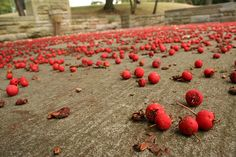 Cherry confetti at Rivewview Park in Pittsburgh by Melissa @ PPC, via Flickr