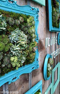 Great idea! succulents in a frame.... Rolling Greens, California garden shop