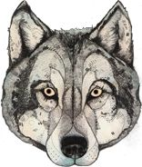 """House of Wolf, Upper Street. """"House of Wolf is a multi-functional, multi-sensory experimental pleasure palace. Traditional Tattoo Woman, Sandra Dieckmann, Owl Tattoo Drawings, House Of Wolves, Wolf Mask, Cool Tattoos For Guys, Cute Dragons, Masks Art, Photo Art"""