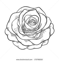 beautiful monochrome black and white rose isolated on white background. Hand-drawn contour lines and strokes. - stock vector