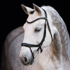COB concord anatomical dressage bridle leather ps//schockemohle The Oxford