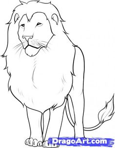 Step 13. How to Draw a Lion