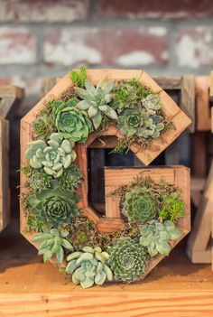 Succulent Letters and Numbers