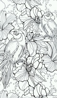 parrots and flowers colouring in page