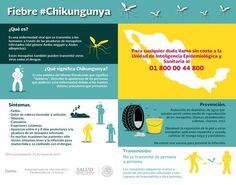 [#infografía] Se habla mucho de la fiebre #Chikungunya. ¿Sabes qué es? #síntomas #salud #enfermedad #prevención #fiebre #InicioCreativo