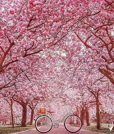 London, Greenwich Park, spring by hobopeeba Beautiful Roads, Beautiful World, Beautiful Images, Sakura Wallpaper, Flower Wallpaper, City Photography, Landscape Photography, Nature Photography, Cherry Blossom Tree