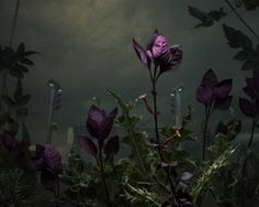 Daniel Shipp: Botanical Inquiry