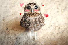 In short, owls are the bee's knees, and everyone should love them. Happy International Festival of Owls!   15 Cutest Reasons Why You Should Love Owls