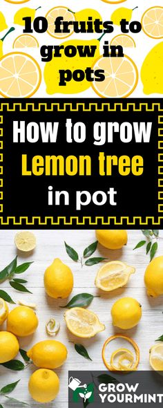 10 Fruits To Grow In Pots So That A Fresh Juice Is Always Close #lemon#lemontree#fruit#garden#gardening#growyourmint.com