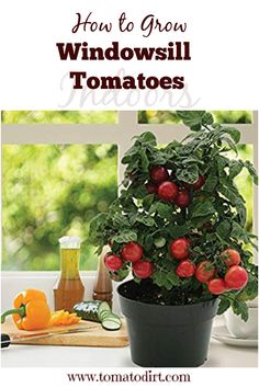 Growing Tomatoes In Containers How to grow windowsill tomatoes or start tomatoes indoors on your window sill with Tomato Dirt Growing Cherry Tomatoes, Growing Tomatoes Indoors, Growing Tomato Plants, Growing Tomatoes In Containers, How To Grow Tomatoes, Tomato Seedlings, Container Plants, Container Gardening, Hobby Lobby