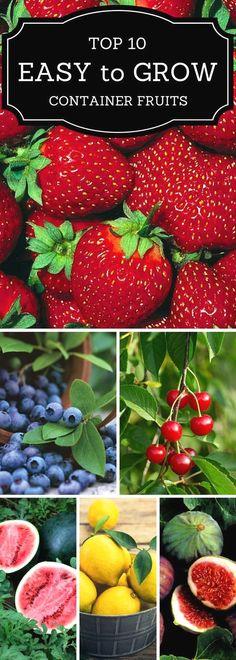Growing Vegetables Top 10 Easy to Grow Container Fruits Fruit Garden, Edible Garden, Herb Garden, Fruit Plants, Potted Plants, Garden Pots, Growing Vegetables, Growing Plants, Vegetables List