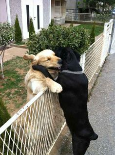 The Best Friendship Ever | The 100 Most Important Dog Photos Of All Time