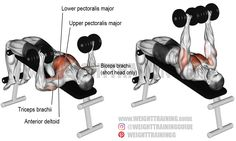 A compound exercise. Synergists: Upper Pectoralis Major, Triceps Brachii, and Anterior Deltoid. Dynamic stabilizer: Biceps Brachii (short head only). Best Chest Workout, Chest Workouts, Gym Workouts, Chest Exercises, Swimming Workouts, Swimming Tips, Fitness Gym, Muscle Fitness, Corps Fitness