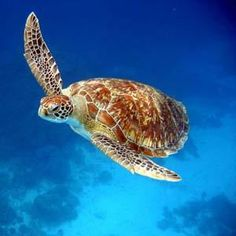 Phi Phi Marine Life