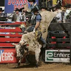 Any of you watching the NFR? Any of you bull riding fans.?
