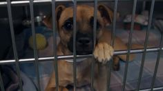 WHAT SHELTERS DON'T WANT YOU TO KNOW!